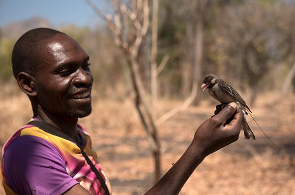 An intense dry season of fieldwork at Niassa