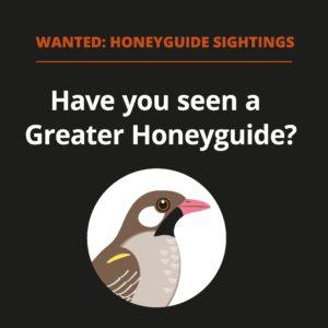 Honeyguiding.me citizen science project