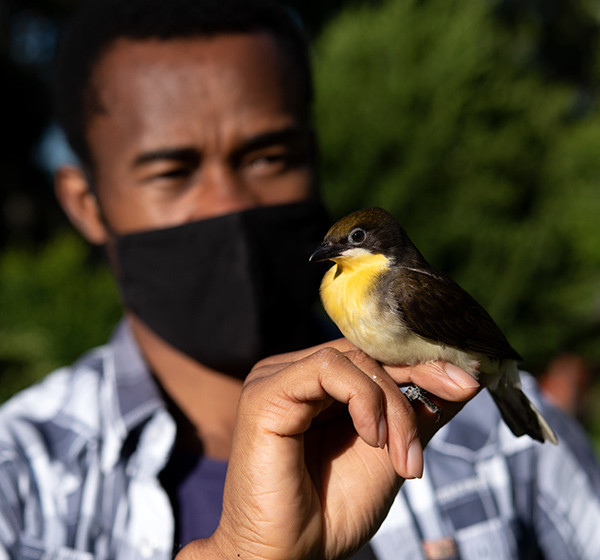 Chima Nwaogu and Jessica van der Wal with greater honeyguides
